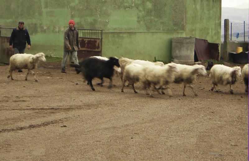 15-03-06-azienda-agricola-fratelli-Duras-crebineddu-Ruinas-OR-002