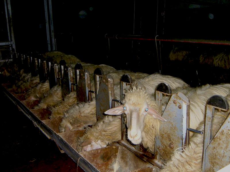 15-03-06-azienda-agricola-fratelli-Duras-crebineddu-Ruinas-OR-003bM