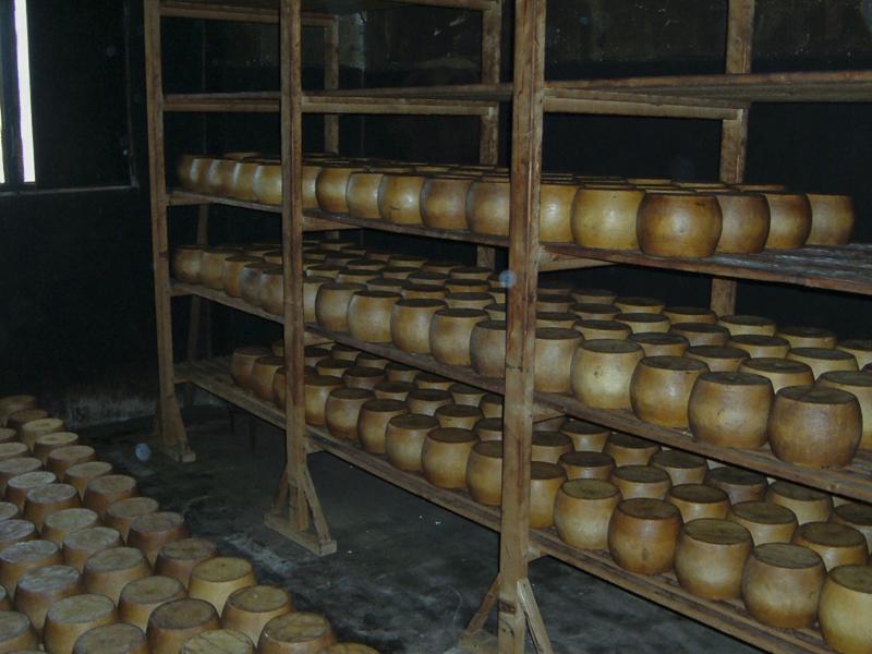 15-03-06-azienda-agricola-fratelli-Duras-crebineddu-Ruinas-OR-019-2