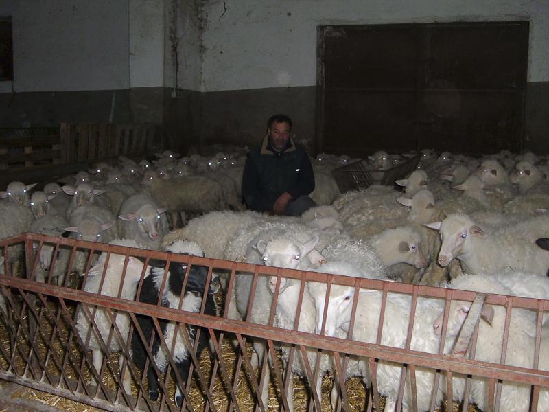 15-03-06-azienda-agricola-fratelli-Duras-crebineddu-Ruinas-OR-019
